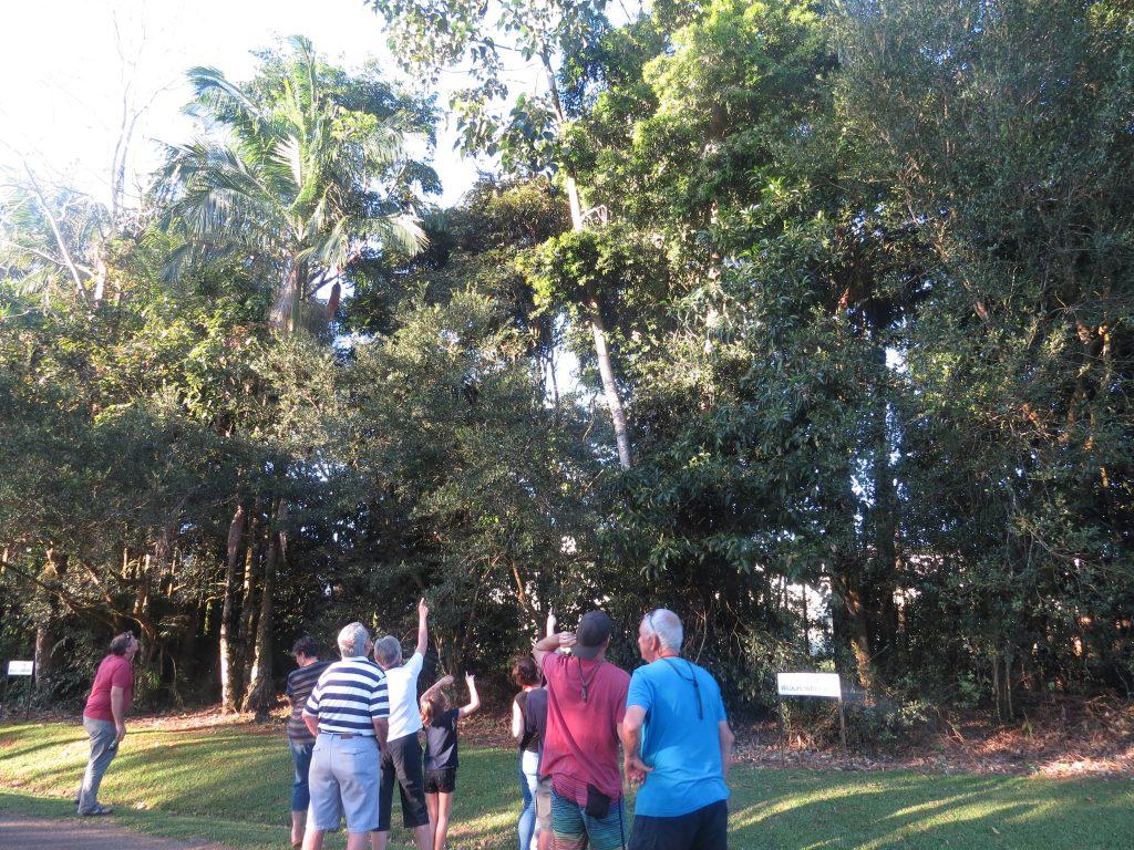 木登りカンガルーを見るツアーの人たち