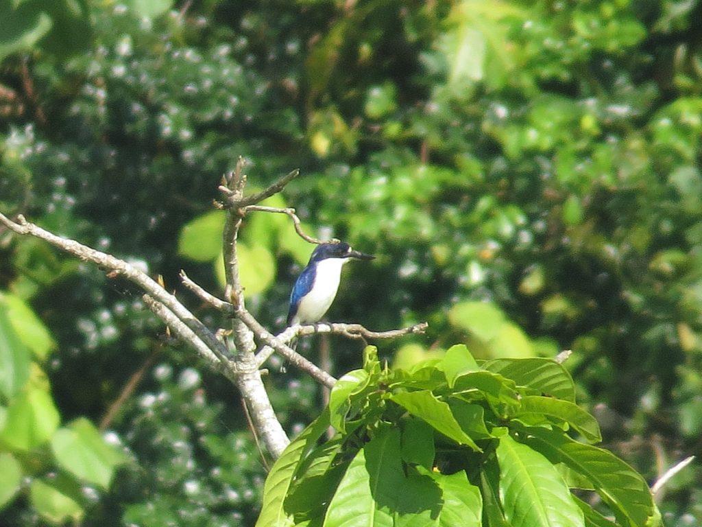 デインツリーリバークルーズの鳥2
