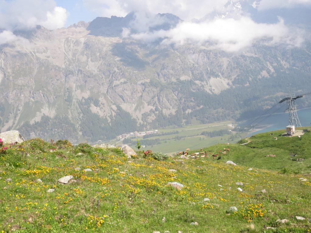 フルチェラス展望台付近の花のある景色