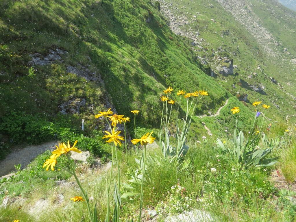 コース脇に咲く花