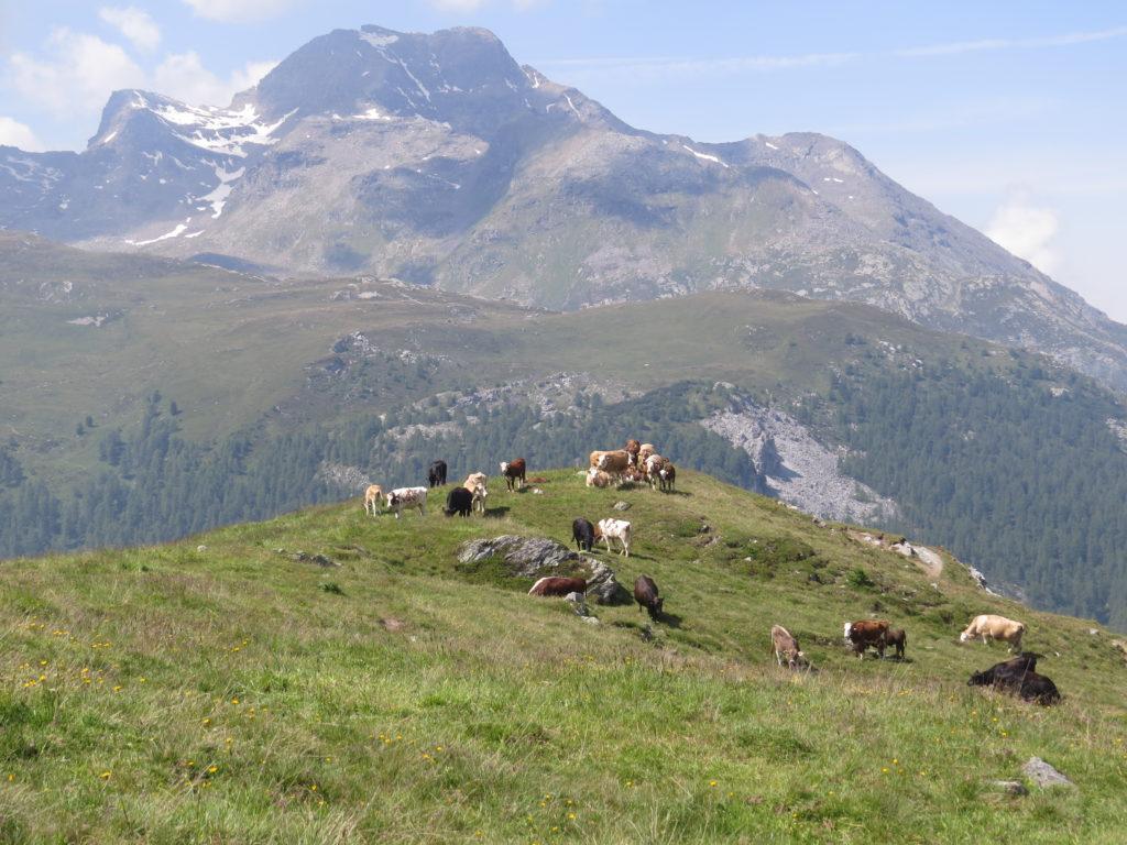 牛たちが集う丘