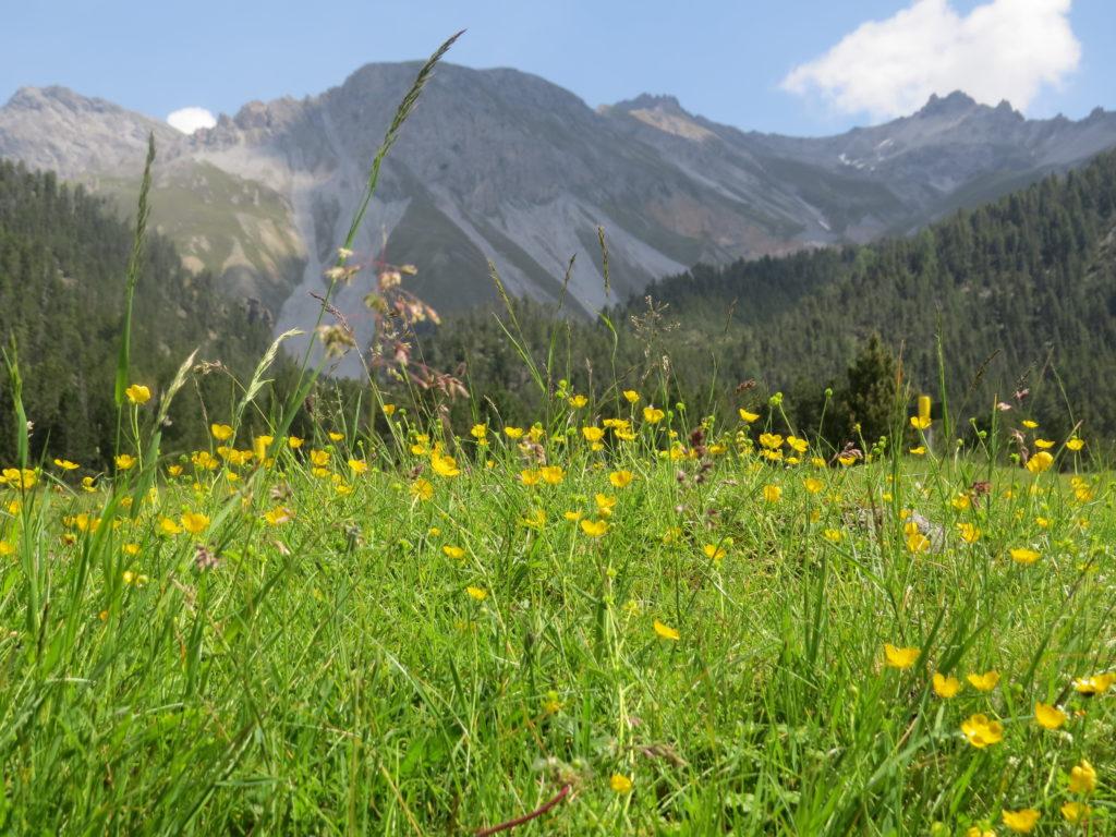 スイス国立公園Stabelchod花