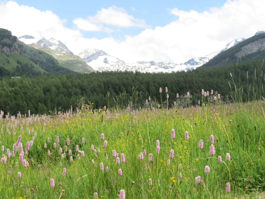 シルス村の山と花のある景色