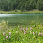 シルス湖と花